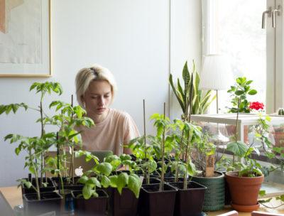 Mina odlingar i maj