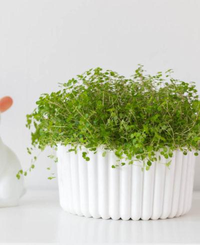 DIY Plaster planter   by Dnilva