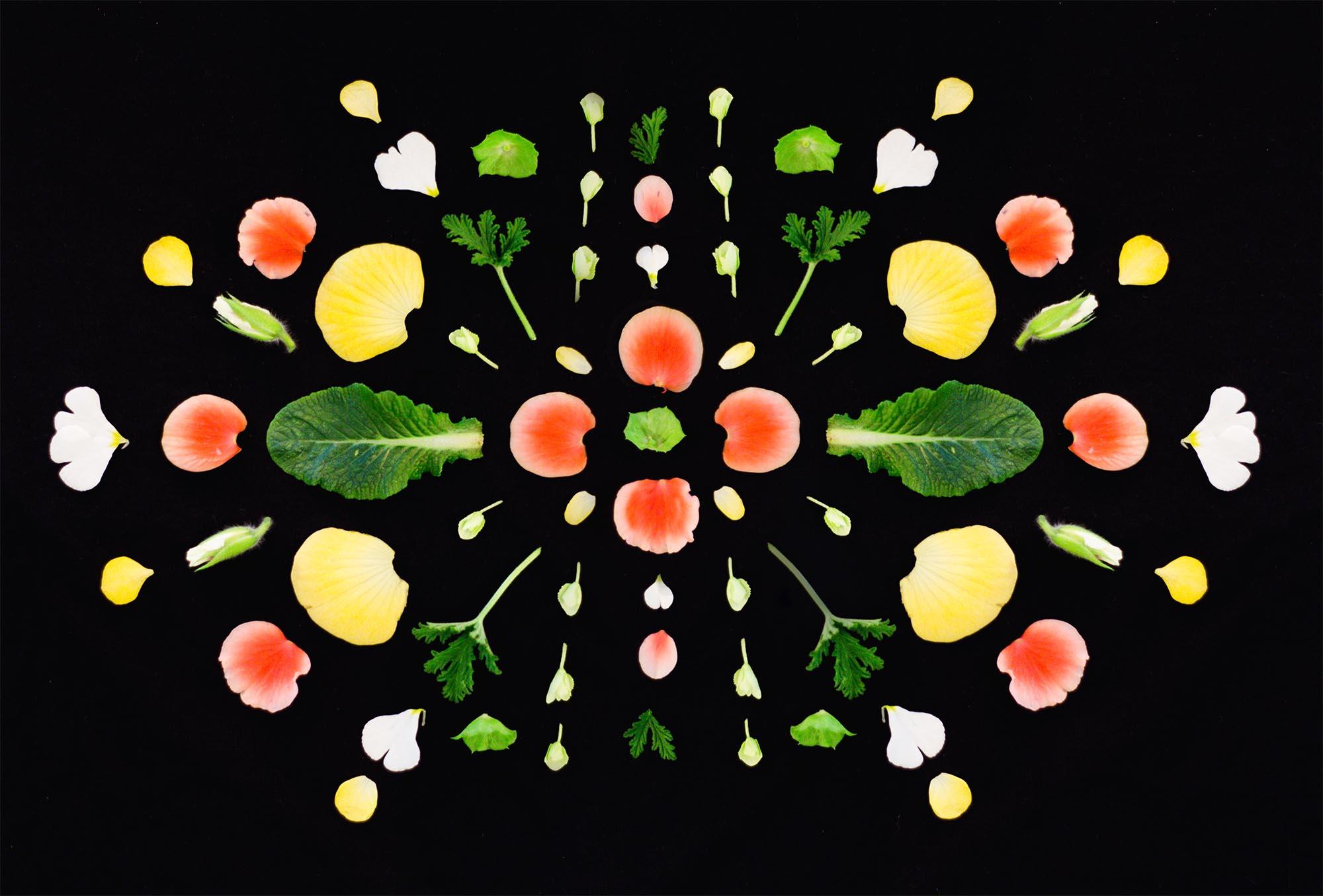 Blomsterpill med Hanna Wendelbo - Blomstermandala av Dnilva