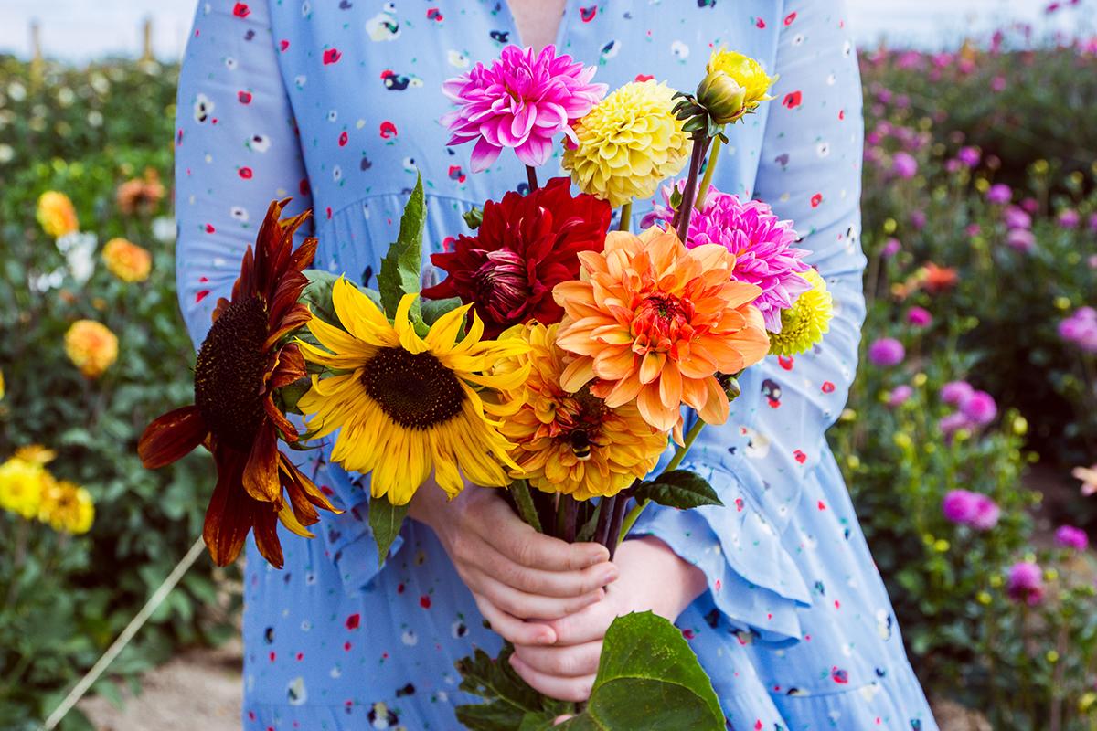 Självplock blommor