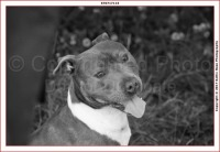 Staffies Rescue day - Oak Tree Animals' Charity