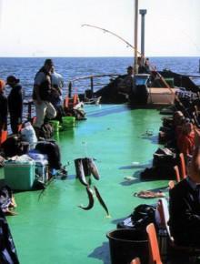 Zeevissen op de Waddenzee