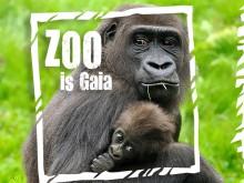 Mooiste dierentuin van de Benelux (GaiaZOO)