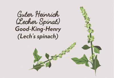 Wird wie herkömmlicher Spinat zubereitet, wirkt jedoch blutreinigend, entzündungshemmend und hilft bei Nieren-, Blasen- und Lungenleiden