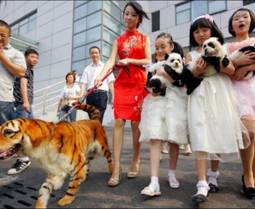 china-wtf-bizarre-crazy-strange-12