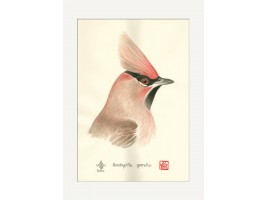 The Bohemian Waxwing