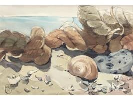 Seashells at Vama Veche