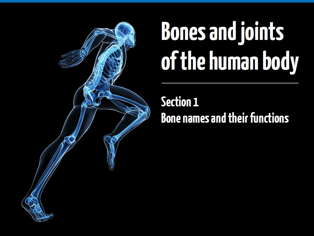 Ymca Awards Bones And Joints Of The Human Body