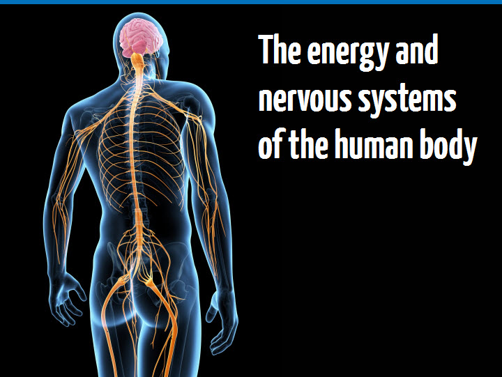 Ymca Awards The Energy And Nervous Systems Of The Human Body