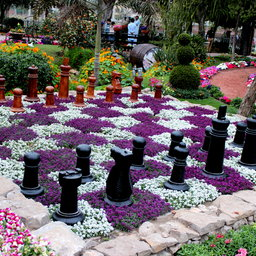Chess board with flowers