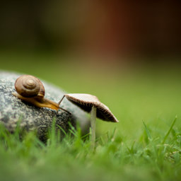 Snail on 'shrooms