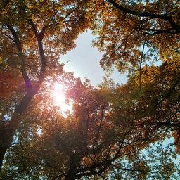 Rays through leaves