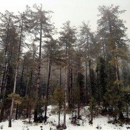 Snowfall near mohra sharif murree