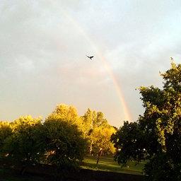 Bird over rainbow