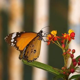 Lines and Butterfly . .