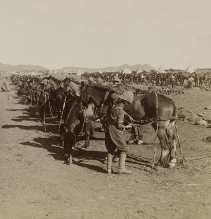Horse Picket of Royal Horse Artillery horse picket, South Africa, 1899 (c)