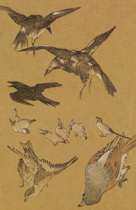 Love leading the Pilgrim - Study of Birds, Crows, Kingfishers, and Sparrows