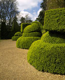 A fine example of topiary in Nymans Garden