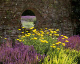 A colourful corner of the garden at Polesden Lacey, a porthole in the wall gives a glimpse of the Lavender Garden