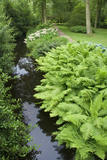 Ferns in lush profusion beside the stream in the garden wood at Dunham Massey, Cheshire