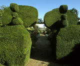 Fun topiary peacocks are to be found in the garden at Peckover House in Cambridgeshire