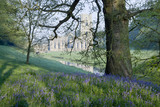 A view over the bluebells of the valley sides towards Fountains Abbey, North Yorkshire, a Cistercian community of monks from the twelfth century until the Dissolution in 1539