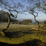 A view over the River Dene with a fallen tree in the foreground in the deer park at Charlecote Park, Warwickshire