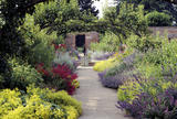 "The Pear Avenue in the Kitchen Garden at Beningbrough Hall, with Monarda ""Cambridge Scarlet"" (Bergamot), Nepeta (Catmint), Alliums and Alchemilla Mollis (Lady's mantle)"