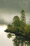 Pine trees at Derwentwater and Brandlehow Point from the east side of Catbells, in the early morning, Cumbria