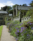 Purple agapanthus and fuchsias in bloom in the Church Border at Lanhydrock