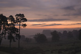 Sunrise over the magnificent 700-acre deer park at Petworth House, West Sussex
