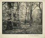 November - A Scene in the Woods at Woolton
