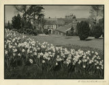 Unidentified Building with Daffodils