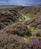 A long shot of a shallow winding gulley through heathland, Longshaw Estate in the Peak District, Derbyshire