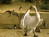 Detail from one of Hondecoeter's bird paintings at Belton House showing a beautiful swan and some ducks