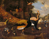 ORNAMENTAL FOWL by Adriaen Van Oolen (1651-1698)