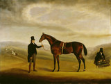 A BAY HORSE, a painting at Florence Court by Sam Spode, post-conservation