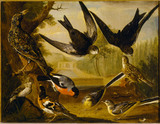 One of a set of nine paintings of birds by Charles Collins, 1736