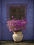Bougainvillea with blue wall