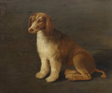 'Bungay', the Favourite Dog of Sir John Harington (1561-1612)