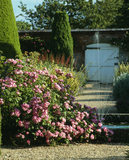 "The Rose Garden at Mottisfont Abbey with the shrub rose ""Raubritter"" in the foreground and a fountain"