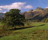 A view of Langdale Pike from near Chapel Stile with a tree in the forefround and mountains behind