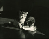 Two Kittens with Milk