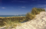 Close up of sand dunes at Studland Beach with grasses, Corfe Castle Estate