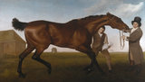 HAMBLETONIAN by George Stubbs c. 1800