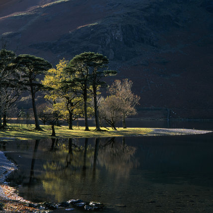 A quiet stretch of the Buttermere shoreline