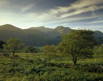 Rowan trees in Snowdonia, Snowdon on the skyline with Hafod y Llan in the middle distance