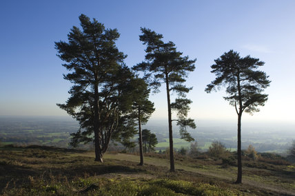 The stunning view from Leith Hill at Dorking, Surrey, the highest point of south-east England