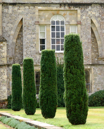 Cypress pillars in the garden at Mottisfont Abbey, with the house beyond