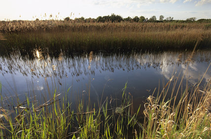 Watercourse at Wicken Fen, Cambridgeshire, with sky and reeds reflected in the water